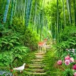 PSD thiên nhiên rừng xanh