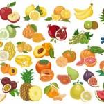 Vector trái cây rau củ quả 22