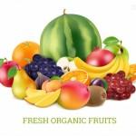 Vector trái cây rau củ quả 39