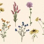 Vector hoa lá cành đẹp 1