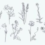 Vector hoa lá cành đẹp 2