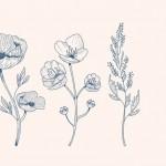 Vector hoa lá cành đẹp 15