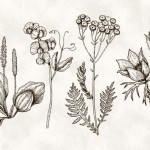 Vector hoa lá cành đẹp 17