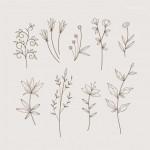 Vector hoa lá cành đẹp 19