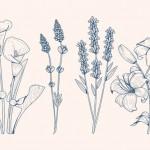 Vector hoa lá cành đẹp 25