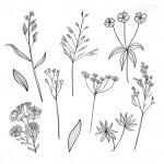 Vector hoa lá cành đẹp 26