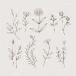 Vector hoa lá cành đẹp 28