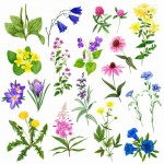 Vector hoa lá cành đẹp 44