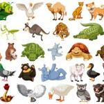Vector động vật tổng hợp