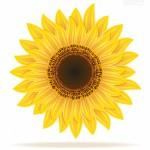 Bông hoa hướng dương vector 3