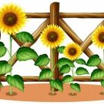 Hoa hướng dương vườn hoa vector