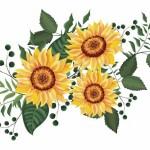 Hoa hướng dương vector đẹp 20