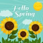Hoa hướng dương mùa xuân vector 2