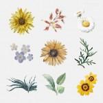 Các loại bông hoa màu sắc vector 2