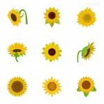 Hoa hướng dương vector đẹp 26