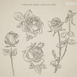 Bông hoa hồng hoa lá vector 15