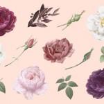 Bông hoa hồng hoa lá vector 17