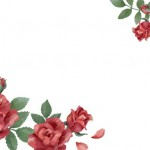 Hoa hồng hoa lá vector 1