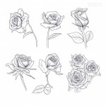Hoa hồng hoa lá vector 2