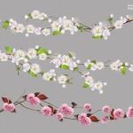 Vector cành hoa đào trắng hồng