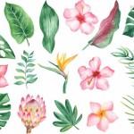 Vector hoa lá các loại đẹp