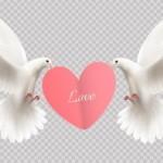 Vector cặp chim bồ câu tình yêu
