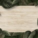 Vector nền gỗ trang trí 8