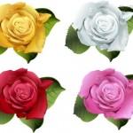 Bông hoa hồng đẹp Vector #4