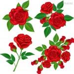 Bông hoa hồng đẹp Vector #6