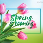 Vector hoa Tulip mùa xuân đến #6