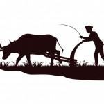 Kho Ảnh Vector Phản Chiếu Nông Dân Cày Bò Trên Cánh Đồng Vector